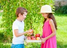 Bambini con le mele fotografia stock libera da diritti