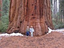 Bambini contro l'albero della sequoia Fotografia Stock