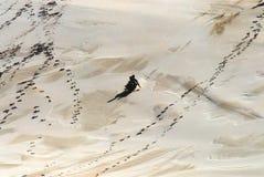 Bambini dell'Africa che Sledding giù una duna di sabbia gigante fotografie stock