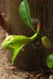 Frutta di Jack Immagine Stock Libera da Diritti