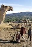 Bambini di Maasai di vita del villaggio, dromedario dell'introduzione Fotografia Stock Libera da Diritti