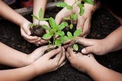Bambini e mani del genitore che piantano giovane albero su suolo nero fotografia stock