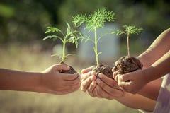 Bambini e plantula della tenuta del genitore in mani immagine stock
