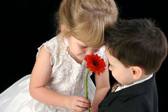 Bambini in giovane età adorabili che sentono l'odore insieme della margherita Fotografia Stock Libera da Diritti
