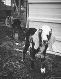 Bambini neonati Fotografie Stock Libere da Diritti