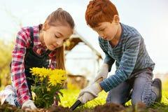 Bambini piacevoli positivi che lavorano insieme Fotografia Stock