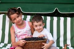 Bambini piccoli della scelta della raccolta di estate dei ragazzi del ragazzo fuori delle bacche caucasiche di infanzia del bambi Fotografia Stock Libera da Diritti