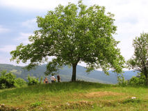 Bambini sotto l'albero Immagini Stock
