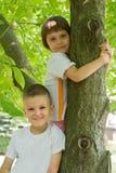 Bambini sull'albero Fotografia Stock