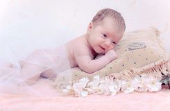 Bambino appena nato del ritratto che si trova in cuscino Immagini Stock