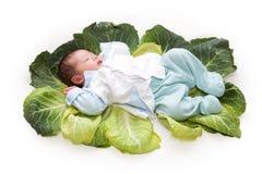 Bambino appena nato in fogli del cavolo Fotografia Stock