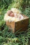 Bambino appena nato in una casella fotografie stock libere da diritti