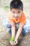 Bambino asiatico che tiene la giovane pianta della piantina in mani, in giardino, sopra fotografie stock
