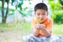 Bambino asiatico che tiene la giovane pianta della piantina in mani, in giardino, sopra immagini stock libere da diritti