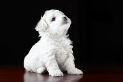 Bambino-Cane Fotografie Stock Libere da Diritti