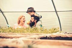 Bambino in cappello della fedora che alimenta i suoi genitori con la mela mentre sedendosi sulle spalle dei daddys Uomo barbuto c immagine stock