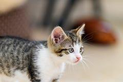 Bambino Cat Playing Immagini Stock