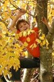 Bambino che arrampica in su un albero Fotografia Stock