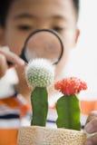 Bambino che esamina cactus con la lente d'ingrandimento immagini stock