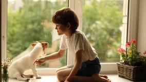 Bambino che gioca con il suo amico del cane sulla finestra stock footage