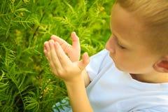 Bambino che gioca sui fiori d'esame del campo del prato Fotografia Stock