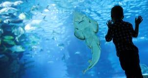 Bambino che guarda il nuoto del banco di pesci nel oceanarium fotografie stock