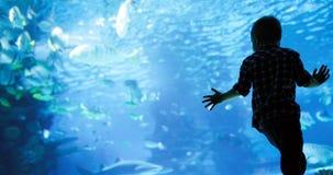 Bambino che guarda il nuoto del banco di pesci nel oceanarium immagine stock