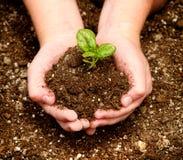 Bambino che tiene un semenzale in loro mani Fotografie Stock
