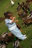 Bambino con gli uccelli Fotografia Stock