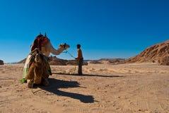 Bambino con i cammelli nel deserto del dahab Fotografie Stock