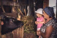 Bambino con l'agricoltore della nonna che esamina mucca nella campagna dell'azienda agricola Fotografia Stock
