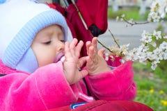 Bambino con un ramo sbocciante Fotografia Stock
