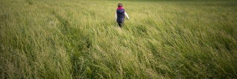 Bambino del bambino che cammina attraverso un prato di alta erba verde Immagine Stock