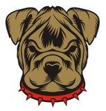 Bambino del bulldog Immagine Stock