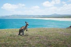 Bambino del canguro sulla spiaggia Fotografie Stock Libere da Diritti
