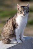Bambino del gatto Immagine Stock