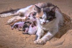 Bambino del gatto nella sabbia Immagini Stock