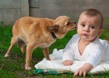 Bambino del ragazzino e cane felici della chihuahua insieme Fotografie Stock Libere da Diritti