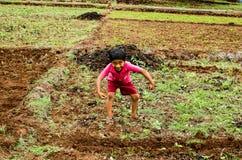 Bambino del villaggio che gioca nell'azienda agricola Fotografia Stock Libera da Diritti