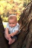 Bambino dell'albero Immagine Stock
