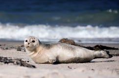 Bambino della guarnizione alla spiaggia Fotografia Stock Libera da Diritti