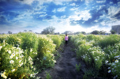bambino della ragazza che cammina nei giacimenti di fiore Fotografia Stock
