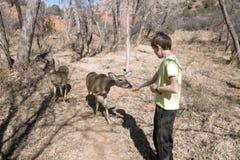 Bambino e cervi dalla coda bianca della Comunità in Palo Duro Canyon Immagini Stock
