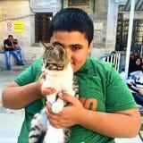 Bambino e gatto Immagini Stock