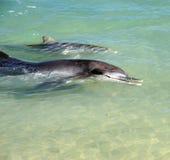 Bambino e madre del delfino Fotografia Stock Libera da Diritti