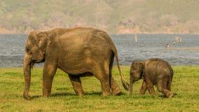 Bambino e madre svegli dell'elefante Immagine Stock