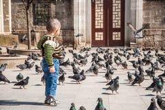 Bambino e piccioni Immagini Stock Libere da Diritti