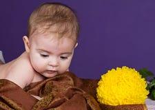 Bambino e un crisantemo del fiore Fotografia Stock Libera da Diritti