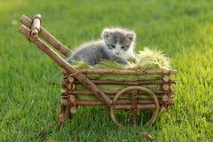Bambino Kitten Outdoors in erba Fotografie Stock Libere da Diritti