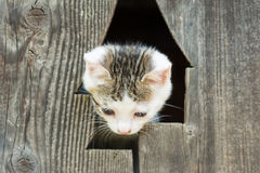 Bambino Kitty Cat Portrait fotografie stock